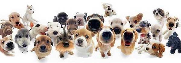Помощь породистым собакам